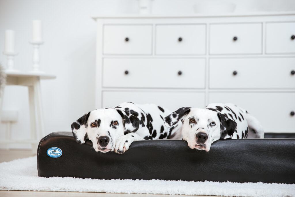Werbefotografie, Hunde, Tiere, Haustiere, Fotografin, Werbung, Marketing, Content, Produktbilder