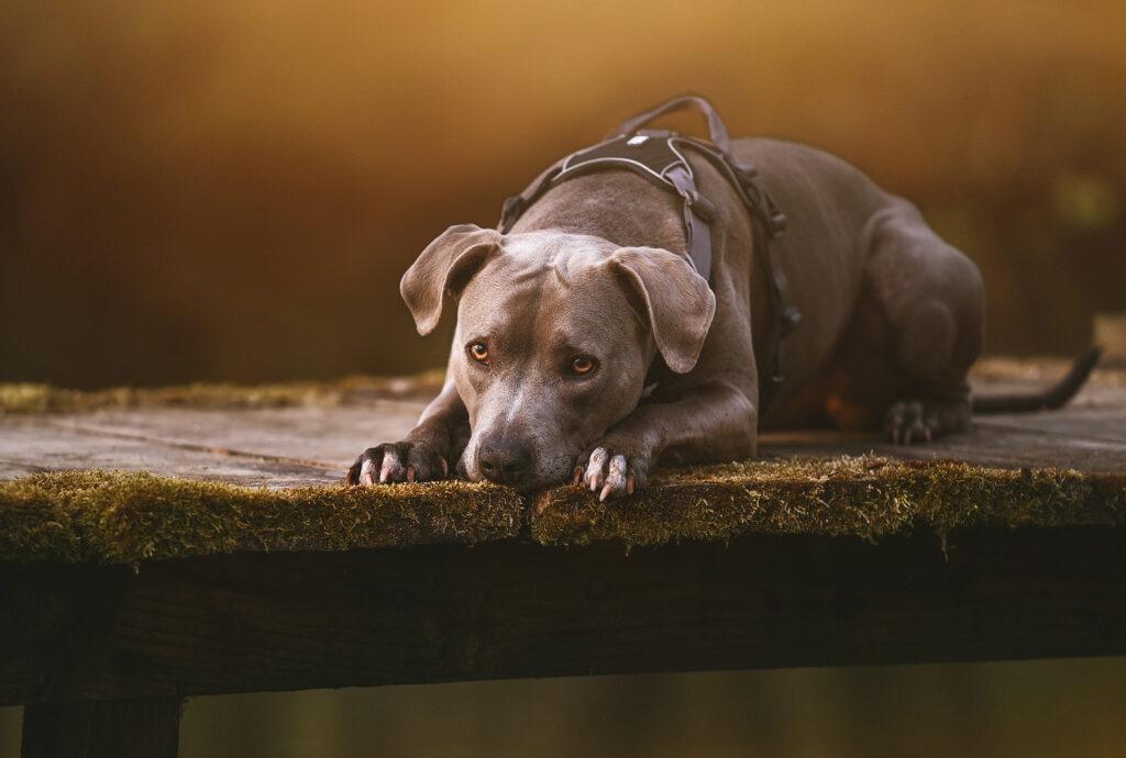 Produktfotografie Haustiere