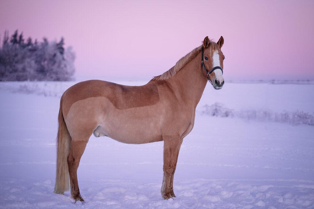 Pferd Fotograf