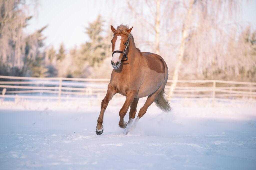 Pferdefotografin Sport, Bewegung Porträt